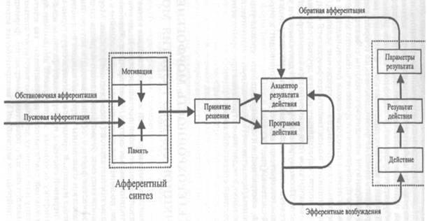 Общая схема функциональной системы как логической модели поведенческого акта по П.К. Анохину.